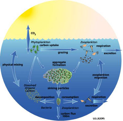 Mary cares about the oceans see animations of the carbon cycle ccuart Choice Image